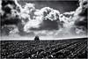 Preparing the Soil... (Ody on the mount) Tags: acker anlässe em5ii himmel landwirtschaft mzuiko6028 omd olympus pflug pflügen schwäbischealb traktor wanderung wolken bw monochrome sw