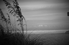 B&W version On the beach (danalcreek) Tags: beach capehatteras northcarolina outerbanks obx grass water atlantic ocean clouds sky pink light