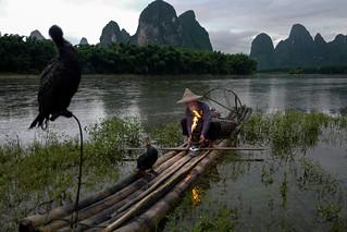 Xingping - Au crépuscule, pêcheur avec ses cormorans sur la rivière Li.