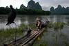 Xingping - Au crépuscule, pêcheur avec ses cormorans sur la rivière Li. (Gilles Daligand) Tags: chine china guangxi xingping rivière li liriver pêcheur cormorans crépuscule lampeàpétrole radeau bambous leicaq