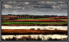 Mirando la naturaleza en libertad (Jose Roldan Garcia) Tags: nubes naturaleza natural colores cielo humedal aire agua vegetación aves paisaje biodiversidad luz libre libertad laguna contrastes