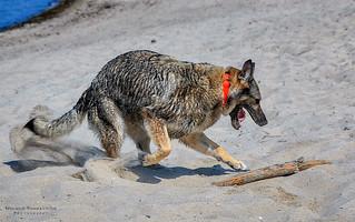 Dog Beach Fun.jpg