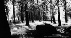 Day Dreaming (...She) Tags: daydreaming blackandwhite bw monochrome mood moody atmosphere trees scenery darknessandlight shadowsandlight shadows scenic scene outdoors nature