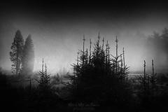 Desolation (Mimadeo) Tags: fog dark darkness scary mystery forest tree trees scenic woods landscape wilderness mist misty white blackandwhite pine pines horror shadow black spooky mood moody evening rain rainy fear creepy mysterious transylvania gloomy gothic foggy norway norwegian cold desolation solitude desolate sorrow sadness nightmare