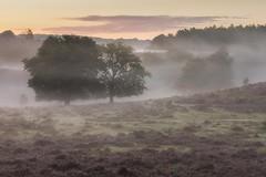 Peaceful Posbank (Sander Grefte) Tags: posbank sunrise zonsopkomst mist misty mistig mistical landscape landschap heath heather heide trees bomen sfeer sfeervol sandergreftephotoscom