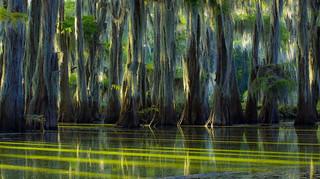 Old Bayou Channel...Caddo Lake