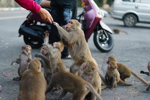 2014.12.16-Monkeys