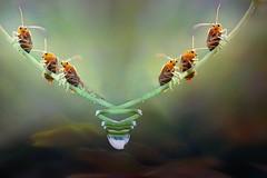 Bisogni notturni (Zz manipulation) Tags: art ambrosioni zzmanipulation natura insetti verde goccia water bosco