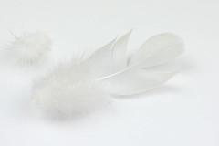 Fluffy feather (high key) (cactus2016) Tags: highkey macromondays white macro feather plume