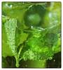 Minty mojito (Stephen Braund) Tags: mint mojito drink green