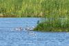 Das Schwimmende Moor von Sehestedt (juergen.treiber) Tags: wattenmeer schwimmendesmoor sehestedt