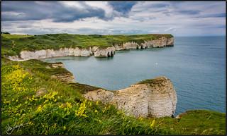 The chalk cliffs of Flamborough Head