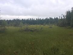 bog at north end of Owl Lake (Stylurus) Tags: michigan seven lakes nature preserve alger county owl lake bog