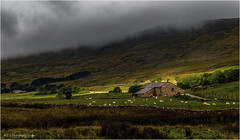 A Band Of Sunshine (Fermat 48) Tags: ribblehead viaduct rain cloud farm house sheep sunshine hills badweather lowcloud darkcloud stonewall yorkshiredales moors canon eos 7dmarkii wind chapelledale