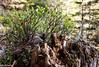 Bole (Kiara´s Imaginatorium) Tags: ettal ettalermandl wanderung bole tree trunck nature