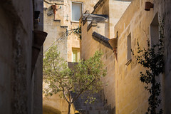 olive tree and stairs in a street of matera, italy (paulcrt) Tags: architecture wall bright europe european green gutter hot italy lamppost matera mediterranean olive shadow south stairs stone street summer sun tree