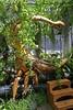 LES MACHINES DE L'ILE (aucoindelarue) Tags: les machines de lile royaldeluxe lamachine courcoult léléphant nantes la nef le carrousel minotaure géants larbre hérons bestiaire mécanique voyages