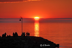SUNSET OVER ST. LAWRENCE RIVER    |  REFORD  GARDENS  |  GASPESIE  |  QUEBEC  |  CANADA (C. C. Gosselin) Tags: sunset over st lawrence river | reford gardens gaspesie quebec canada canon7dmarkii canon 7dmarkii 7d markii mark ii canoneosrebelt2i canoneos7d canon7d eos7d canoneos eos rebel t2i ph:camera=canon everything scenery fine gold flickr elite