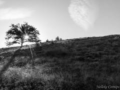 Nationaal park de Veluwezoom (Nelleke C) Tags: 2016 nationaalparkdeveluwezoom boom gelderland landscape landschap nederland netherlands tree veluwezoom