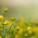 Tiny+flowers