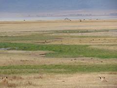 DSC00425 (francy_lioness) Tags: safari jeep animals animali ippopotami leone savana gnu elefante iena pumba tanzaniasafari ngorongorocratere gazzella antilope leonessa lioness facocero
