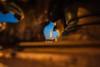 Franca-Paris-0032.jpg (Casal Partiu Oficial) Tags: ponto turistico paris torre eiffel franca eiffeltower pontoturistico torreeiffel france létanglaville îledefrance frança fr
