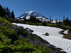 Spray Park Trail (Go4Hike) Tags: spraypark hiking hikingwashington washingtonhiking summerhiking nature landscape trail washingtontrails pacificnorthwesthiking pacificnorthwest mtrainier mtrainierhiking mountains flowers mtrainiernationalpark julyhiking summerhikinginwashington beargrass avalanchelily lupine