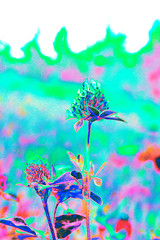 psychadelic clover (salmonsalmon) Tags: clover false colour blue pink green weeds wildflowers tree barrie ontario canada