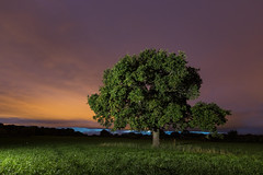 The Flash Test (Rob Pitt) Tags: off camera flash the test wirral cheshire tree night light painting oak tokina 1116 yongnuo wireless trigger rob pitt photography darkness