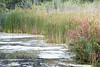 170907_026 (123_456) Tags: hitland capelle aan den ijsel nieuwerkerk natuur recreatie gebied