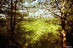 DSC_3523 (Olga Kapushtenska) Tags: wood tree bridge putila chernivtsi nature mountains water pine christmas river bukovina путила буковина карпаты горы лес сосны река природа olga k
