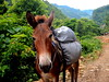 DSCN5048 (StephyyyClarke) Tags: mule donkey horse trekking himalayas rubyvalley trek nepal himal ganeshhimal mountains rural community isolated