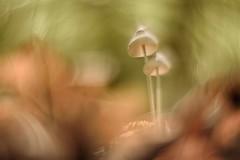 IMG_0125---.jpg---hélios-44-2-58mmf2-lentille-inversée---champi-- web (Monique J.) Tags: lentilleinversée swirlybokeh sousbois bokehtournant bokehtunnel bokeh