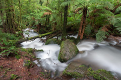 Cement Creek, Mt Donna Buang (Derek Midgley) Tags: dsc0178 cement creek mt donna buang
