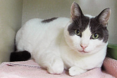 Miles - 8 year old neutered male