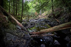deadfall, crystal creek (twurdemann) Tags: 06ndsoftgrad canada canyoneering crystalcreek deadfall forest fujixt1 hiawathahighlands hiawathapark kinsmenpark landscape leeseven5 longexposure nature northernontario ontario park saultstemarie scenic trees viveza water xf14mm