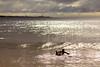 AY6A0441 (fcruse) Tags: cruse crusefoto 2017 surferslodgeopen surfsm surfing actionsport canon5dmarkiv surf wavesurfing höst toröstenstrand torö vågsurfing stockholm sweden se