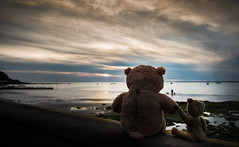 """Family..."" - The Best of Times (Ian Johnston LRPS) Tags: teddy bear sunset family bestoftimes beach island clouds sea shore waves nikon d800 2470f28 bears 2017"