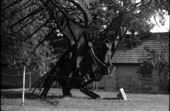 Iron bird (Arpádkoos) Tags: iron blackandwhite blackwhite zenit zenitxp12 tatabánya