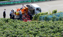 All picked and packed (oobwoodman) Tags: switzerland suisse schweiz grandvaux vendange wine vineyards vin vignoble vignes rebe grapes trauben raisins pinot harvest ernte