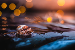 Shell | Explored on 2017.10.01 | Thank you all! (Pásztor András) Tags: bokeh 50mm f18g water wave reflection blue orange colorful moody calmness macro shell snail cone amazing nature dslr nikon d5100 hungary andras pasztor photography 2017