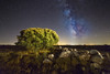 La encina y la Vía (Alfredo.Ruiz) Tags: holmoak palencia sky galaxy night astronomy milky way nature space background landscape universe star tree starry science light constellation milkyway nebula cosmos travel summer outdoor spain
