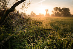 network (Rafael Zenon Wagner) Tags: sony a7rii 16mm gegenlich contralight sonnenaufgang sunrise sonne sun light licht morgen morning golden gold gras spinnennetz spiderweb wiese meadow morgentau morningdew