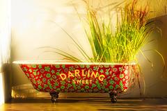 Flower Tub (Daniela 59) Tags: 7dwf flora darlingsweet tub bathtub flowerpot plant colourful vibrant decoration darling westerncape southafrica danielaruppel