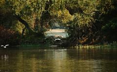 My secret (hidden) place (Inka56) Tags: danube birds river island tree seagulls 7dwf landscapes