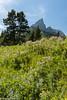 Wildflowers near Red Rock Canyon. (greggohanian) Tags: watertonlakesnationalpark redrockcanyon albertacanada wildflowers mountains nikond800 nikon2470 nikon