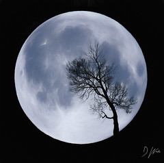 Moon Tree (domwlive) Tags: adobephotoshop astronomy countydurham digitalart imagecomposition imagemanipulation impressionism lunar moon northeastengland peterlee skies topazlabs tree august england unitedkingdom gb