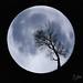 Moon+Tree