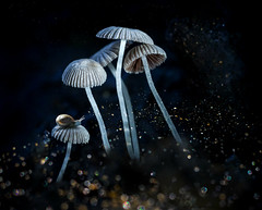 whispers in the night (marianna_a.) Tags: night sparkles mushrooms gilled group family fungi snail composite p8120505 mariannaarmata hss sliderssunday magical mystic dark bokeh