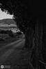 Camino (J.Gargallo) Tags: blancoynegro blackwhite blackandwhite blanconegro byn bw canon canon450d canonefs18200 eos eos450d 450d mosqueruela teruel aragón españa